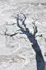 073  United States - Yellowstone National Park