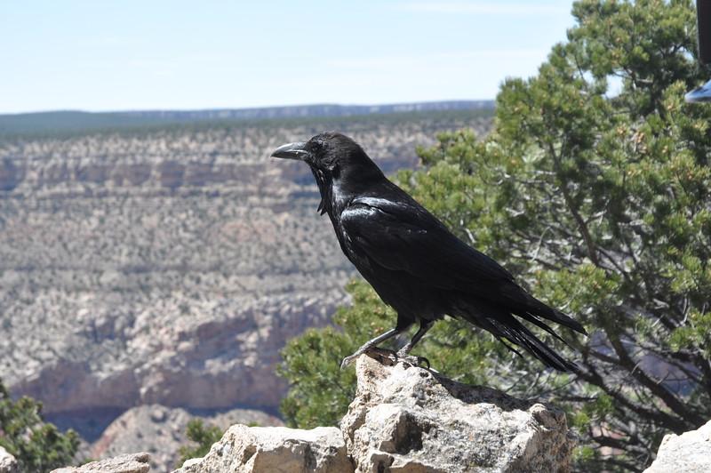 005  United States - Grand Canyon
