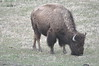 052  United States - Yellowstone National Park