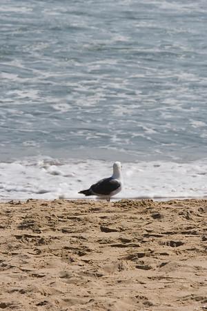 """<span class=""""photoid"""">[0056Newport Beach 070512]</span>"""