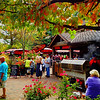 Grape Harvest Festival 2014