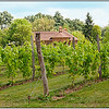 Gervasi Vineyard & Winery