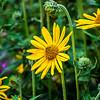 Flowers in Price Park, North Canton, Ohio.