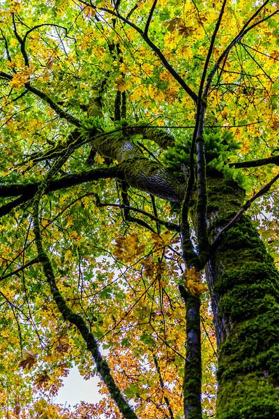 Portland, Oregon, United States