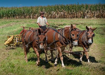 AmishCountry12