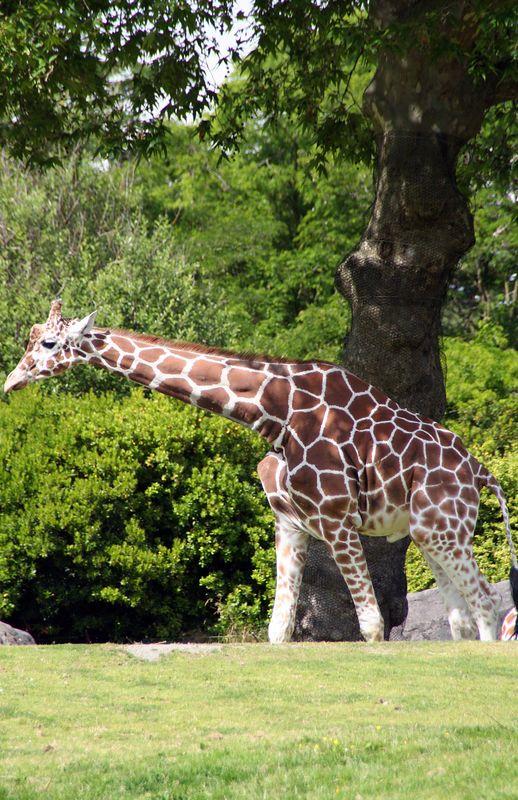 Woodland zoo.