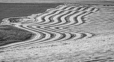 Texture produced by a partial harvest of hay that awaits the baling machine.