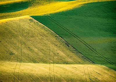 Even in color, there are textures and tractor tracks.