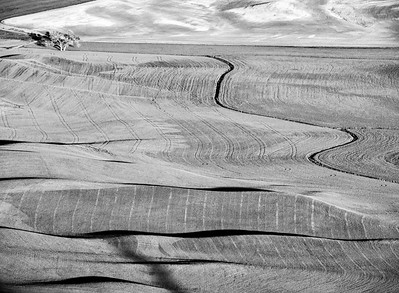 Plowed fields, a  tree and a winding irrigation channel