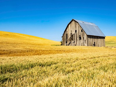 There is something majestic about barns in wheat fields even when they are well past their prime.