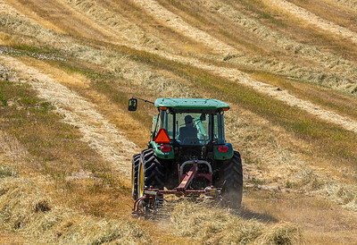 Cut straw is fluffed so that it will dry prior to being baled.