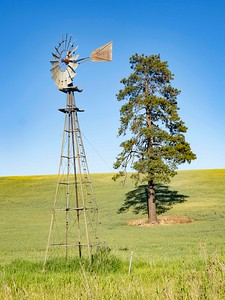 Old Windmill with lone tree
