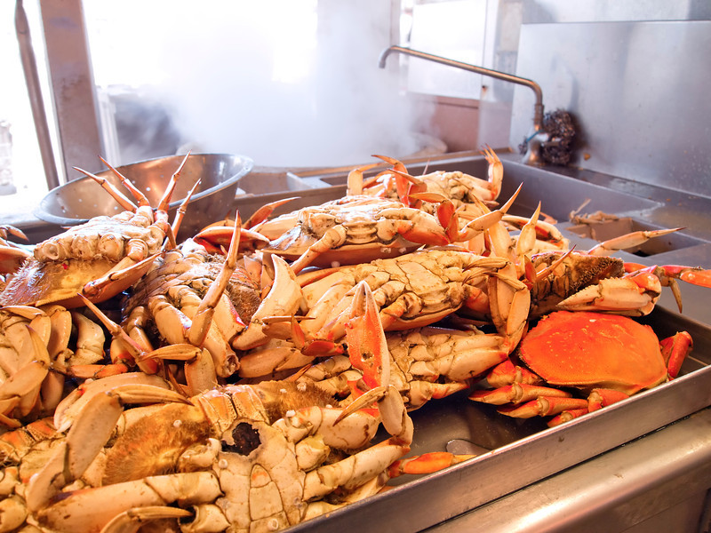 Many Dungeness crabs, freshly cooked in boiling water, are cooling off in a kitchen and waiting to be served.