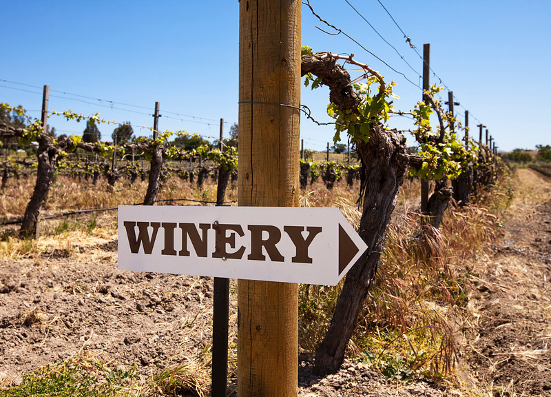 A winery sign in a vineyard surrounded by gnarly old vines. The vines are just starting to send out shoots in the spring.