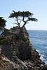 A single cypress tree stands on a rocky promontory overlooking the Pacific Ocean. This is a landmark near Carmel-On-The-Beach.