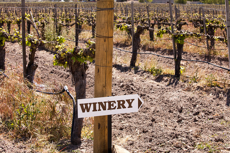 Directions to a winery are posted on one of the end posts in a vineyard with grapevines trained to the trellis wires in the background.