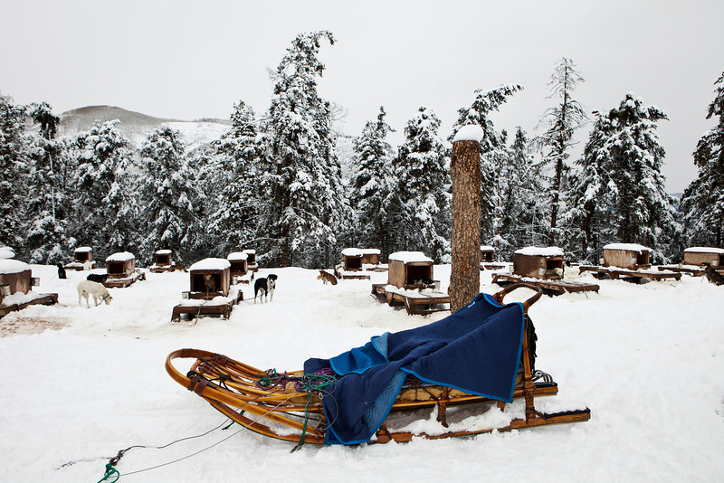 A traditional wood sled with blue blanket is ready to be harnessed with dogs for a run in the winter. The sled dog kennels are in the background.