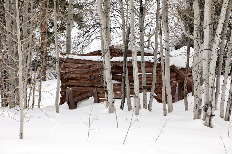 An old abandoned wood log cabin covered in snow that is located in a stand of aspen trees in the Colorado backcountry.