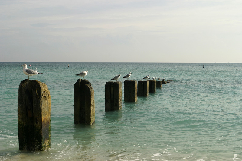 Old Pier With Seagulls