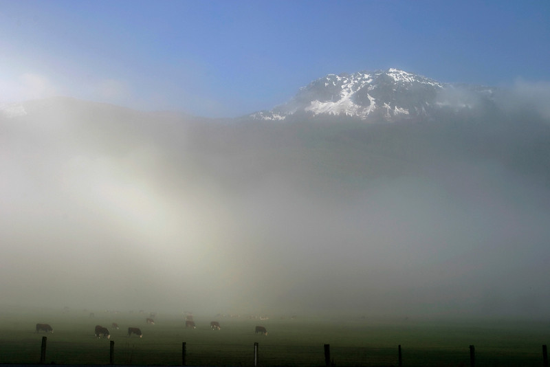 "Dairy cows grazing in a pasture underneath snow-covered mountains. The layer of fog separates the two parts of the image -- the light layer on the left is a ""fogbow"" -- the opposite of a rainbow formed by diffused sunlight from behind the photographer illuminating the fogbank. The mountains are the Cascade range in the Pacific Northwest."