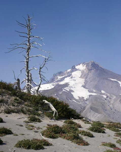 A view looking up towards the summit of Mt. Hood in Oregon shows the desolate outlook for plants at high altitudes.