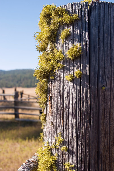 An old wood fence post in a corral in Central Oregon has green moss or lichen growing on it.