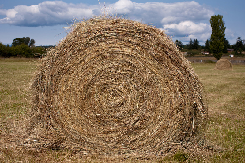 A large roll of hay in a field on a farm. This is a common scene in rural, agricultural areas of the country.