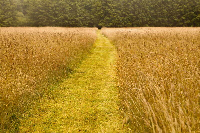 A mowed path goes through a hay field into the direction of an entrance into a forest.