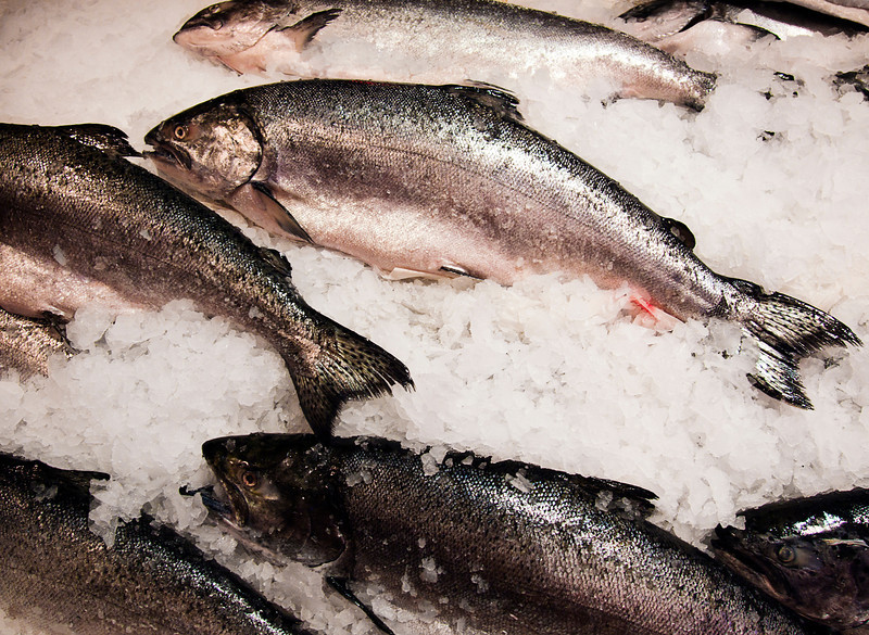 A variety of fresh salmon at a fish market is neatly displayed on a bed of chipped ice.