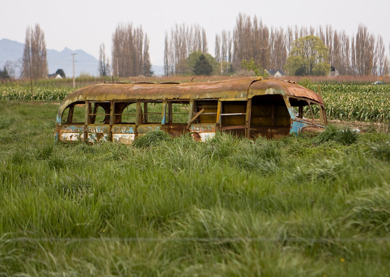 An old school bus has been abandoned in a rural field in Skagit Valley in Washington State.