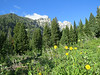 Wildflowers in Cascade Canyon