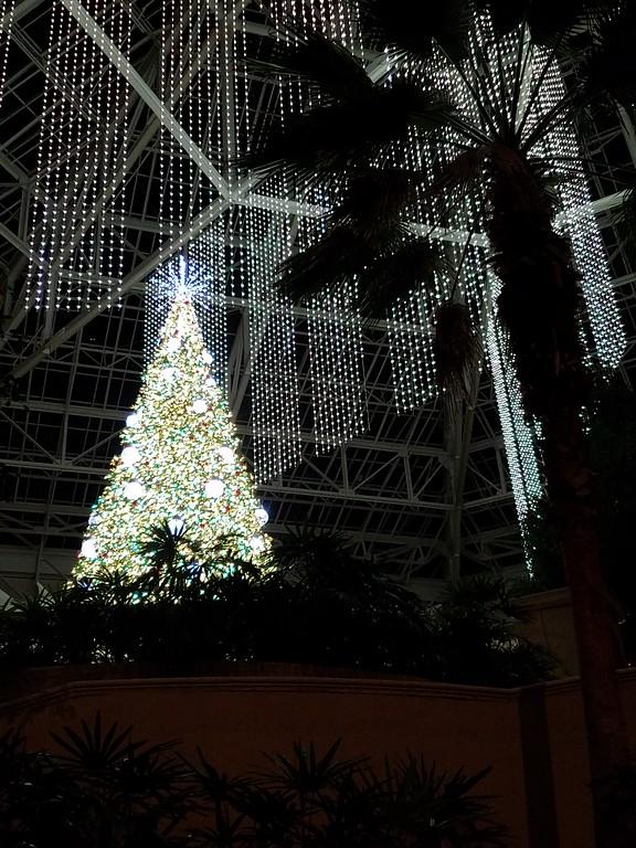 IMAGE: https://photos.smugmug.com/Travel/United-States/US-Southeast/Orlando-2018/i-GjZvRrk/0/2c972829/XL/2018_01%20%2840%29-XL.jpg