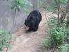 Soth Bear