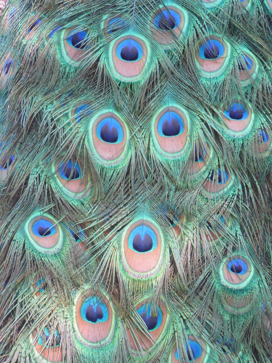 IMAGE: https://photos.smugmug.com/Travel/United-States/US-Southeast/Washington-DC/DC-2015/National-Zoo/i-fHkhsQz/1/1ff2f2ec/X3/DC_2015_A%20%28712%29-X3.jpg