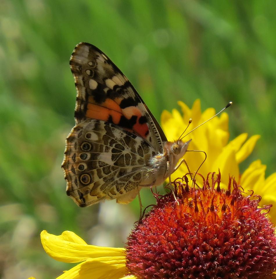 IMAGE: https://photos.smugmug.com/Travel/United-States/US-Southwest/Santa-Fe-2017/Audubon-Center/i-fKdVqCL/0/697c84c0/X2/Santa_Fe_2017_A%20%28435%29_crop01-X2.jpg