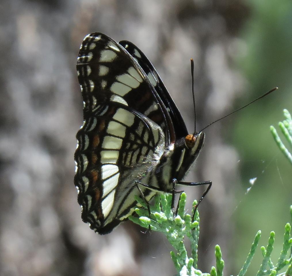 IMAGE: https://photos.smugmug.com/Travel/United-States/US-Southwest/Santa-Fe-2017/Audubon-Center/i-vgNKh8H/0/92ae2b25/X2/Santa_Fe_2017_A%20%28430%29_crop01-X2.jpg