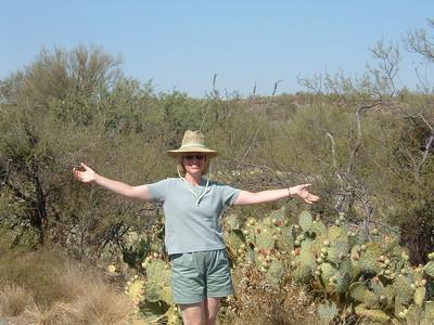 Desert Parks