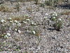 Pebble Pincushion