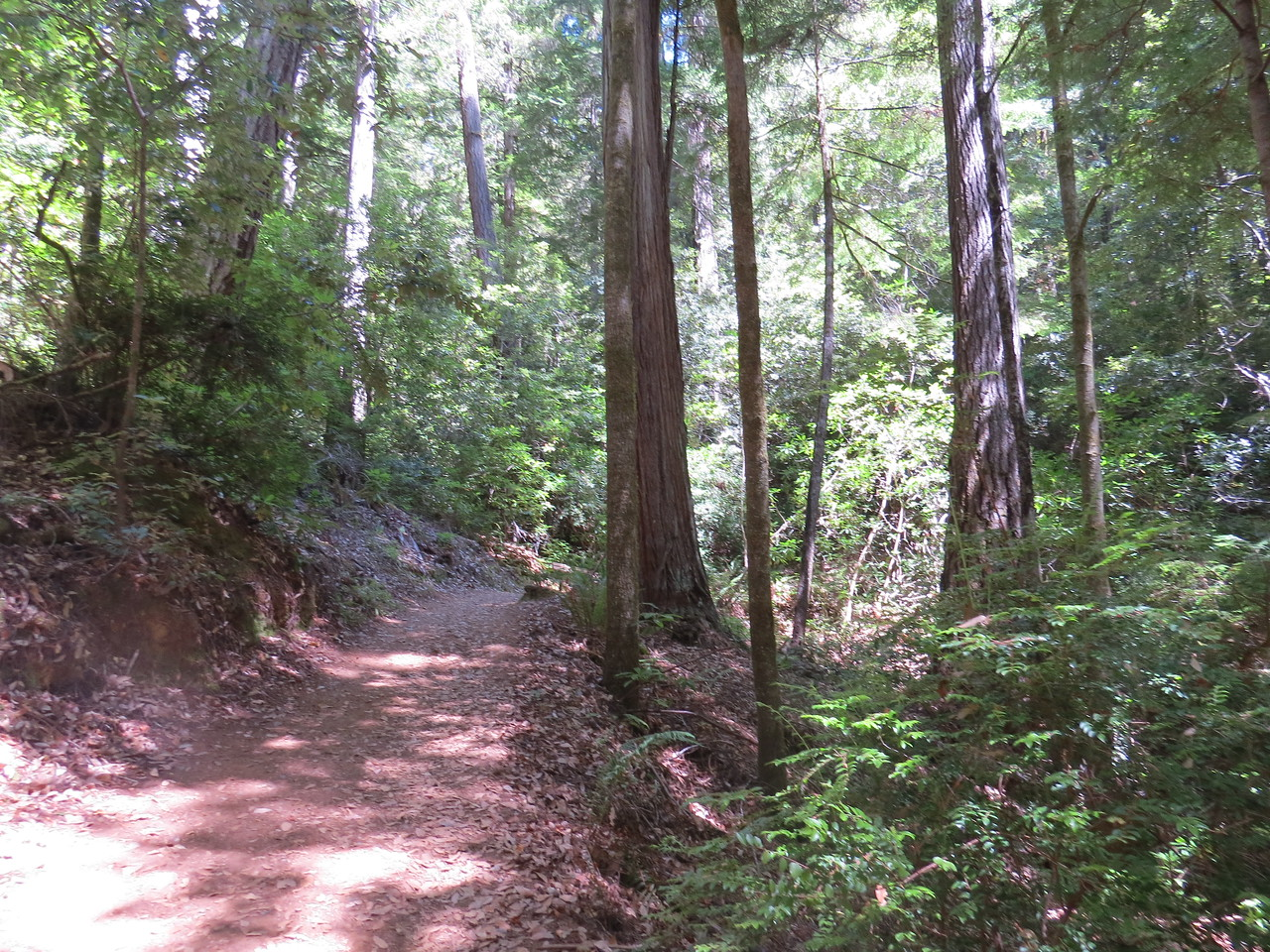 Looking back up the trail to the Tall Trees Grove.