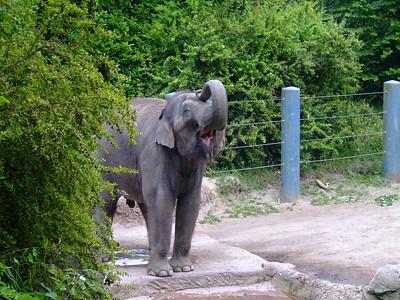 Seattle Area Zoos
