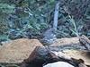 Fow Sparrow