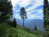 Along the High Sierra Trail