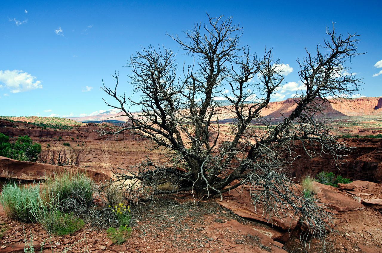 Capitol Reef National Park, Utah, United States