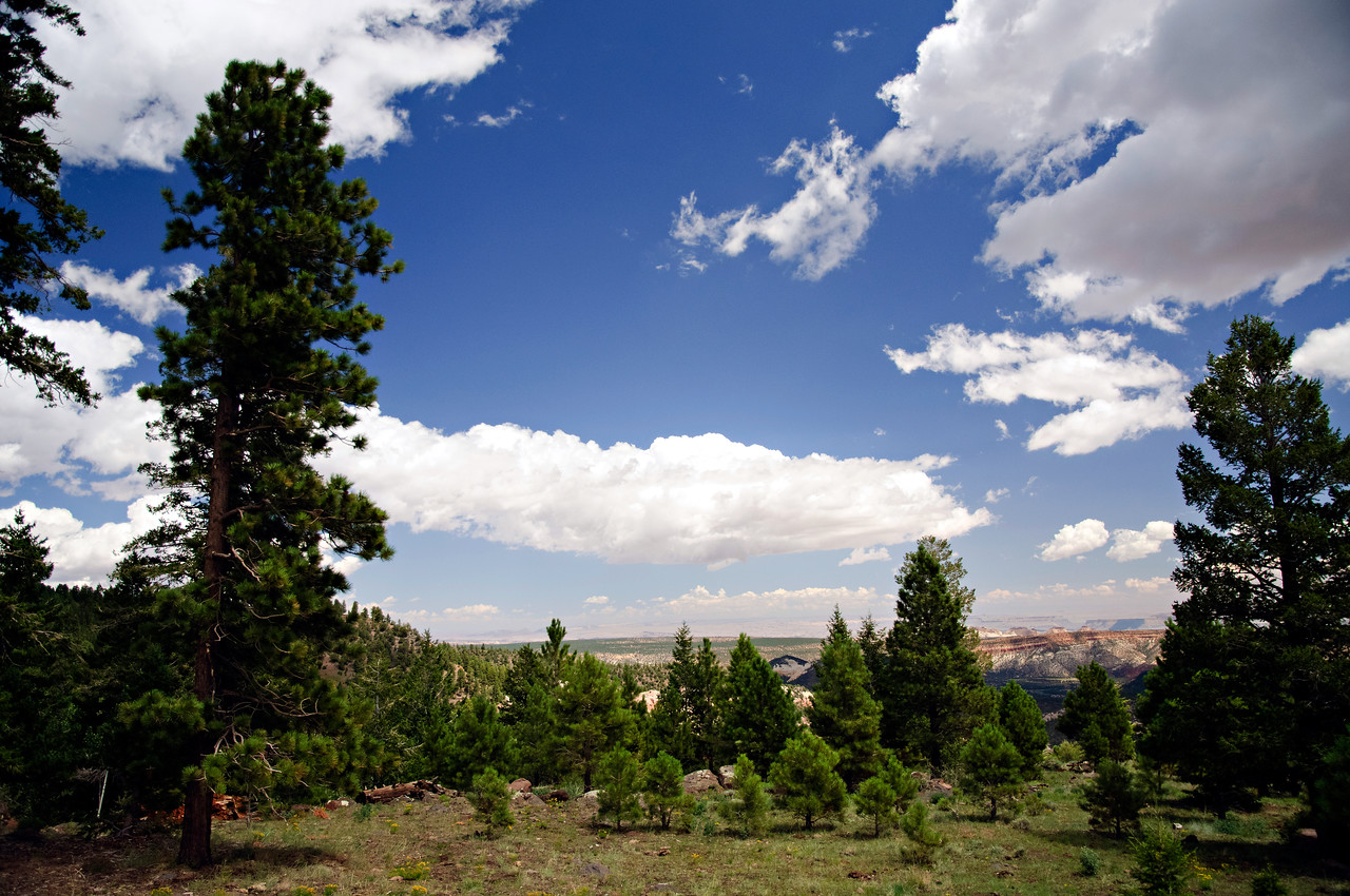 Dixie National Forest, Utah, United States