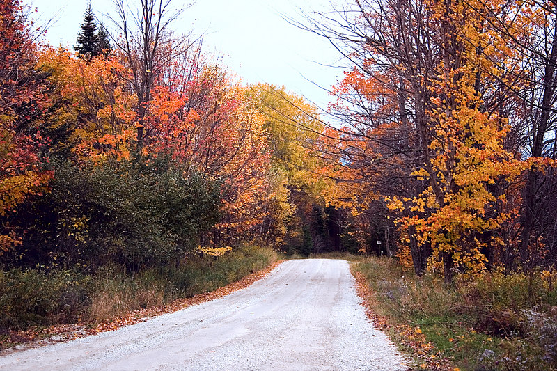 Another country road lined with the color of fall leaves.