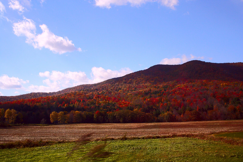 The sun lights the tassels on the grain in the field and sets the trees afire in a glow of red as we drive by.