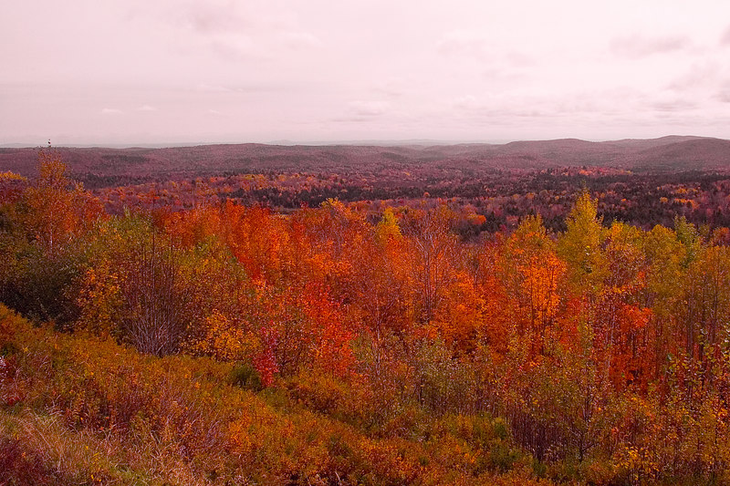 The trees come in many colors.
