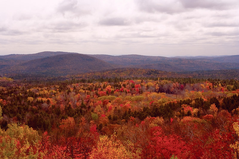 This view of the tree tops reminds me of a colorful quilt.
