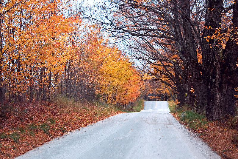 A country road in Southern Vermont lined with the color of Fall leaves.