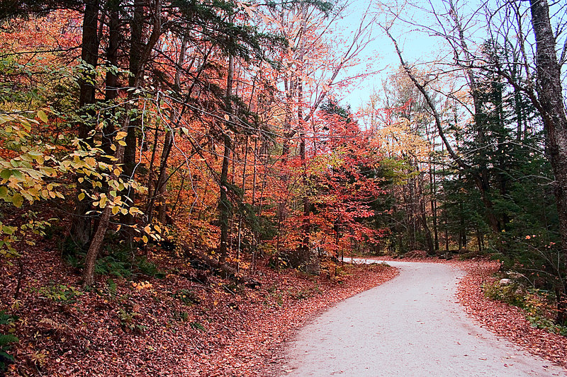 """On the other side of the bridge the road continues in a lovely """"S"""" curve lined with trees and fallen leaves."""